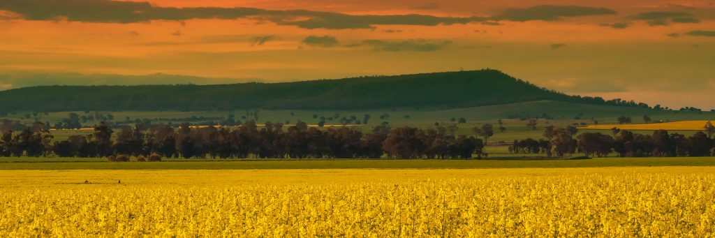 Neville Stephens  Canola and Colours cropped